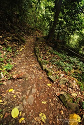 The Path to Mambukal's Waterfalls