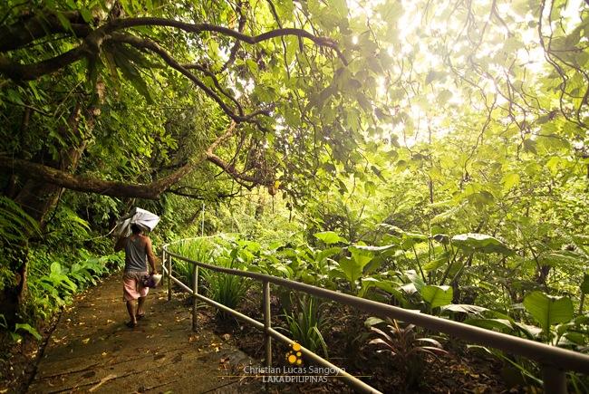 Green Everywhere to Majayjay's Taytay Falls