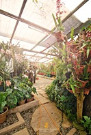 Orchids Galore at a Greenhouse