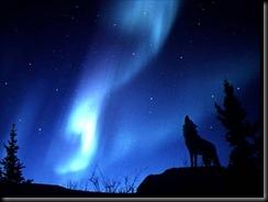 Evening_Howl-(1024x768)-thief