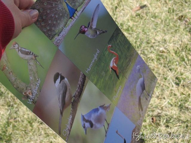 Watching Birds | Birds & Eggs