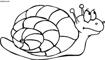 jccc caracoles  (5)