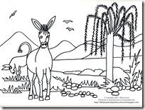burro (2)
