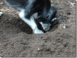 Dig Dig, Sniff Sniff!