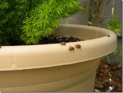Ladybug highway