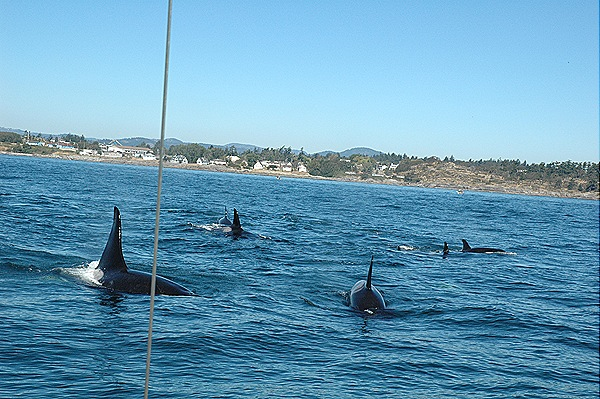 [whales 184[6].jpg]