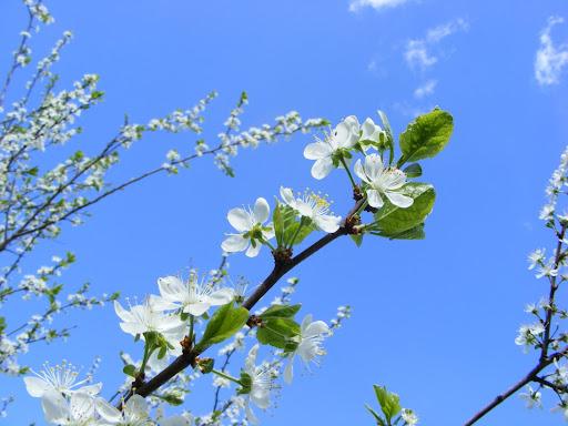 love spring ;x