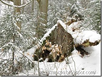 Прогулка по зимнему лесу возле парка Hambachtal