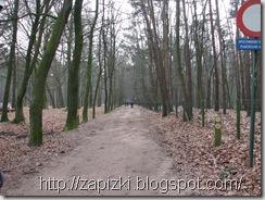 Лес во Фландрии