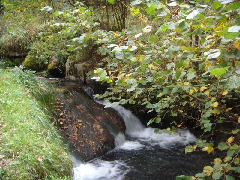 El rio Pino