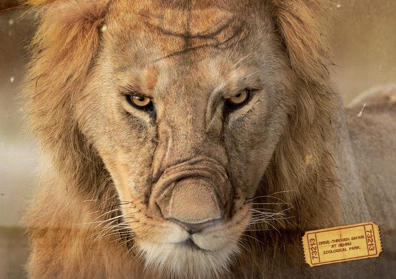 nehru_lion.jpg