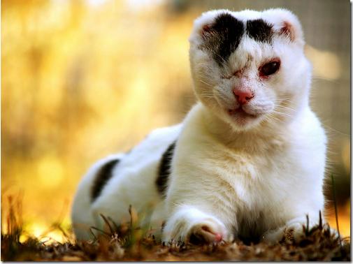 fotos de animais fofos e engraçados more freak show blog (1)
