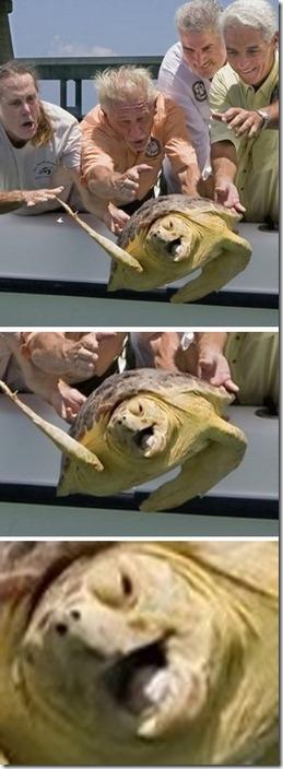 fotos de animais fofos e engraçados more freak show blog (30)