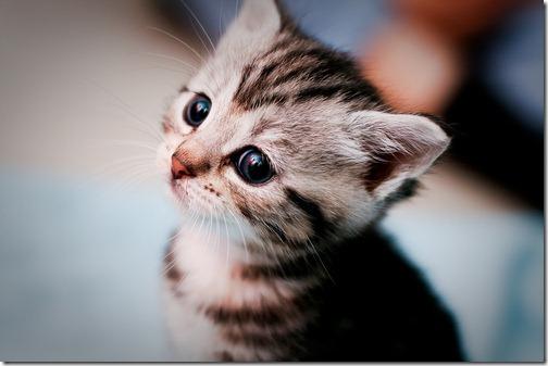 fotos de animais fofos e engraçados more freak show blog (4)