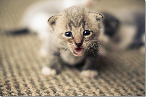 fotos de animais fofos e engraçados more freak show blog (8)