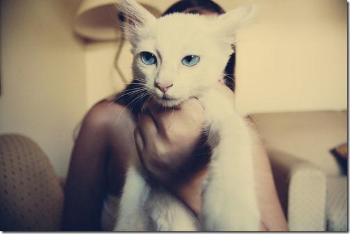 fotos de animais fofos e engraçados more freak show blog (22)