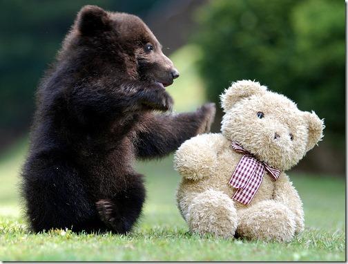 fotos de animais fofos e engraçados more freak show blog (25)
