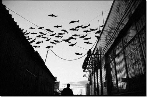 more freak show foto arte peixes fish (13)