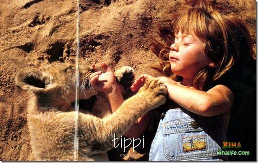 Book livro Tippi pequena garota e sua amizade com Animais selvagens  (14)
