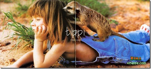 Book livro Tippi pequena garota e sua amizade com Animais selvagens  (18)
