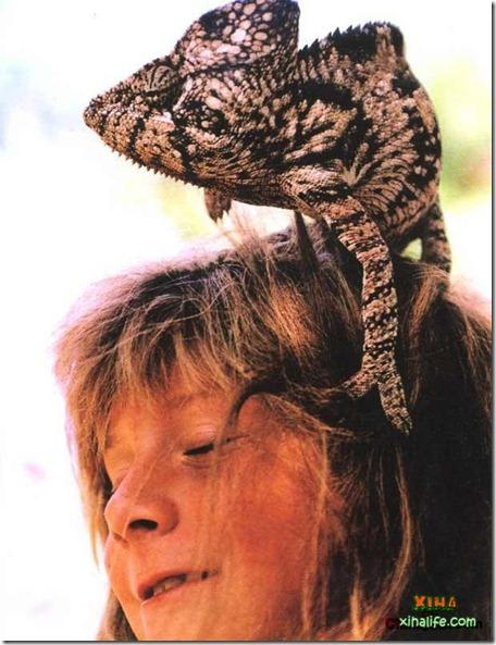 Book livro Tippi pequena garota e sua amizade com Animais selvagens  (10)