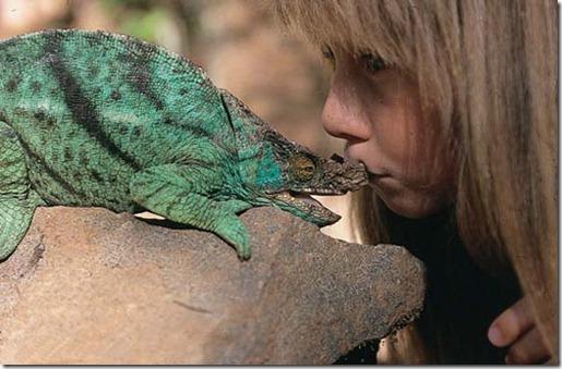 Book livro Tippi pequena garota e sua amizade com Animais selvagens  (21)