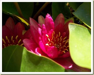 fleurs vacances 1