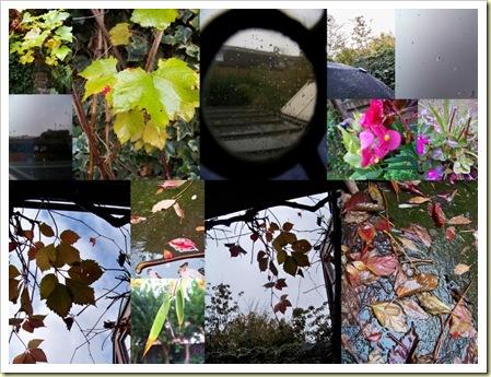 automne pluvieux 2009