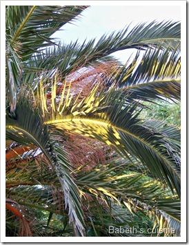 palmiers 2