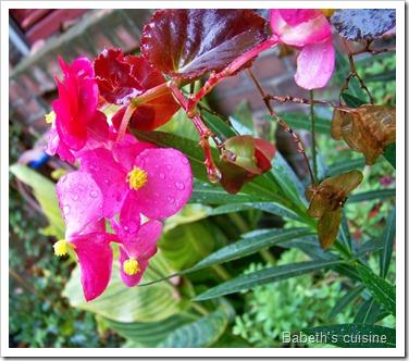 fleurs sous la pluie