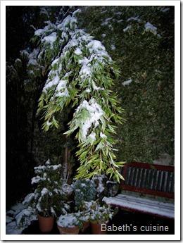 bambou sous la neige 1