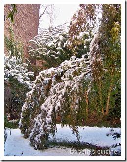 bambou sous la neige