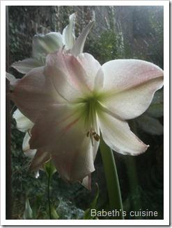 fleur jour 2 365
