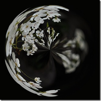 white flower bokeh swirl