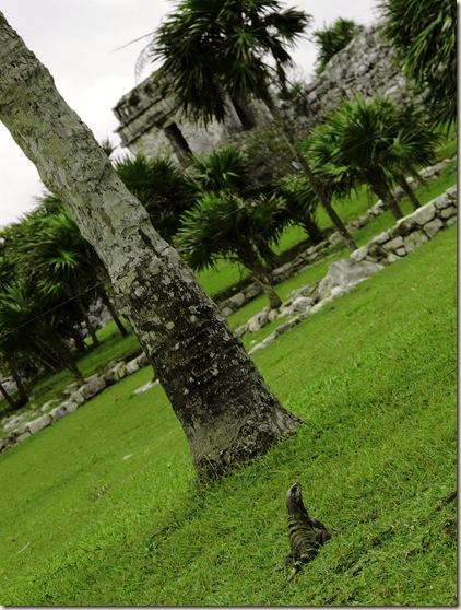 iguana palms