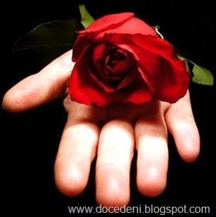 mão e rosa