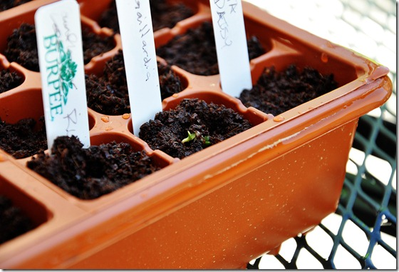 Seeds - 2