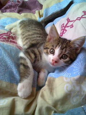 Pour les amoureux des chats - Page 2 15-06-08_1333