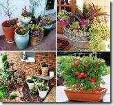 Container_Garden