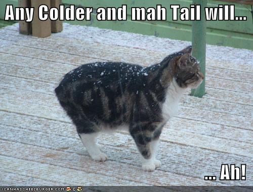 Any Colder and mah Tail will... ...Ah!