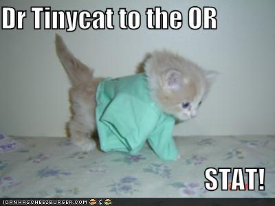 Dr Tinycat to the OR STAT!