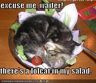 excuse me, waiter! there's a lolcat in my salad