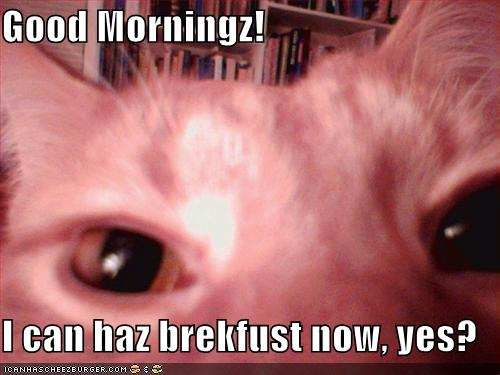 Good Morningz! I can haz brekfust now, yes