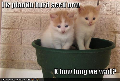 I iz plantin burd seed now K how long we wait