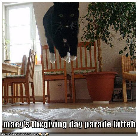 macys thxgiving day parade kitteh