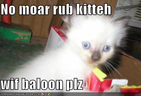 No moar rub kitteh wif baloon plz