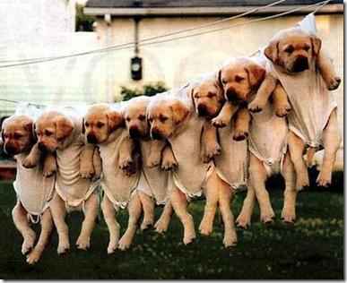 _cachorrinhos