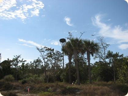 Ft. Myers & Sanibel Island 026