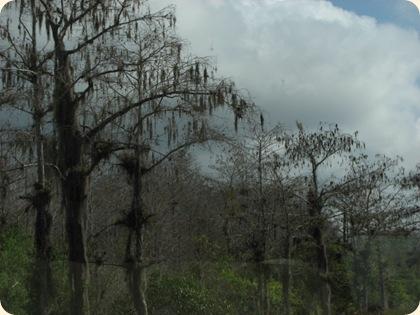 Everglades Highway 010