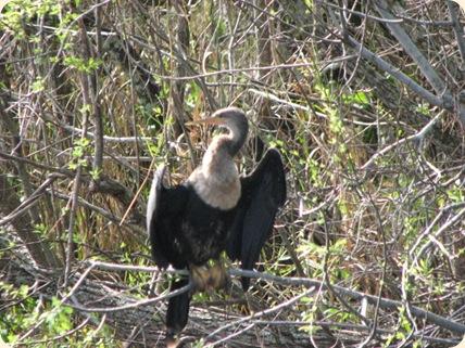 Everglades Highway 025